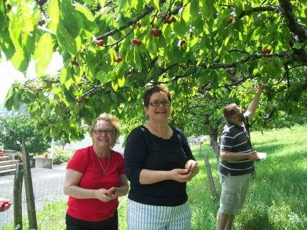 cherry picking 2